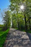 Route par la forêt Image libre de droits
