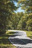 Route par la forêt Photos stock