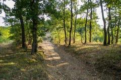 Route par la forêt de chêne Photos libres de droits