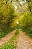 Route par la forêt et les champs d'automne Photo libre de droits