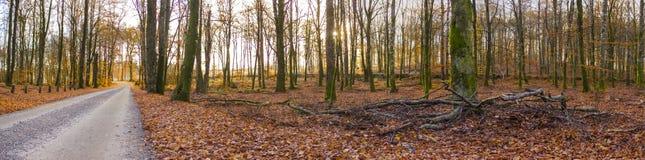 Route par la forêt suédoise (HDR) Photographie stock