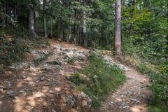 Route par la for?t image libre de droits