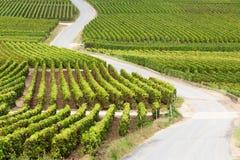 Route par la vigne Photo libre de droits