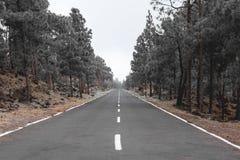 Route par le paysage de forêt Image libre de droits