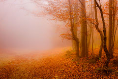 Route par le soleil de forêt d'automne? et les lames de couleur Image stock