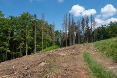 Route par les arbres morts Photographie stock libre de droits