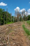 Route par les arbres morts Image libre de droits