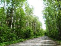 Route par les bois Photographie stock libre de droits