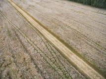 Route par un champ de blé Images libres de droits