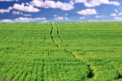 Route par un champ vert des nuages, sérénité Photos libres de droits