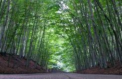 Route par un tunnel des arbres photos stock
