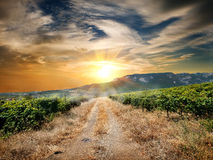 Route par un vignoble Photos libres de droits