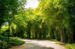 Route parmi la forêt en bambou Photo libre de droits