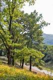 Route pavée avec des pavés menant au château de Schonborn Chynadiyovo, Ukraine Photographie stock libre de droits
