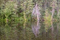 Route perdue d'étang de castor, rivière, Woodstock NH 03262 Photo libre de droits