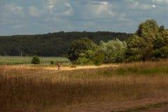 Route poussiéreuse menant vers la forêt proche Photo stock