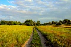 Route poussiéreuse par un champ vert Photographie stock libre de droits