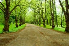 Route profonde Photo libre de droits