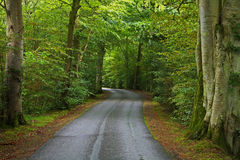 Route rayée par arbre Photos libres de droits