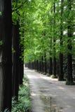 Route rayée par arbre Images stock