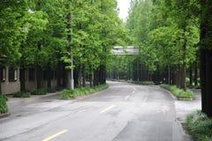 Route rayée par arbre Image stock