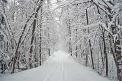 Route rayée par arbre de l'hiver avec la neige Images libres de droits