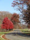 Route rayée par arbre en automne Images libres de droits