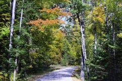 Route rayée par forêt Images libres de droits