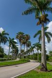 Route rayée par palmier photographie stock libre de droits