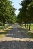 Route rayée par arbre Photo libre de droits