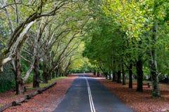 Route rurale australienne en automne photographie stock libre de droits