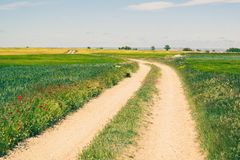 Route rurale dans la campagne avec des cultures de céréale pendant le ressort images libres de droits