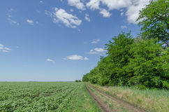 Route rurale dans le domaine vert Image stock