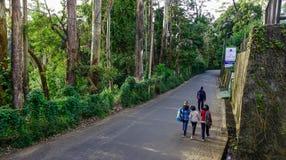 Route rurale dans Nuwara Eliya, Sri Lanka photo libre de droits