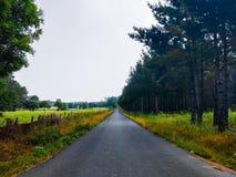 Route rurale droite le pré entre les arbres et herbe verte camino image stock