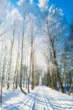 Route rurale en hiver, arbres de bouleau photo libre de droits