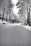 Route rurale glaciale par la forêt Image libre de droits