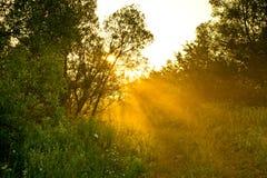 Route rurale le matin Photographie stock libre de droits