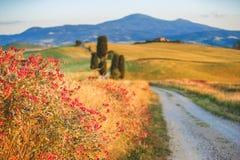 Route rustique blanche naturelle en Toscane, Italie Photographie stock libre de droits