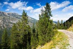 Route sale par la montagne de forêt Images libres de droits