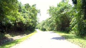 Route sauvage avec des ombres de branche d'arbre sous le ciel lumineux clips vidéos
