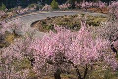 Route scénique de montagne Image libre de droits