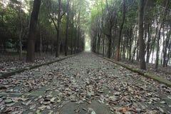 Route silencieuse couverte de feuilles, dans la forêt foncée en hiver Images libres de droits