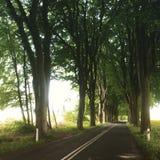 Route sous les arbres de hêtre énormes Images stock