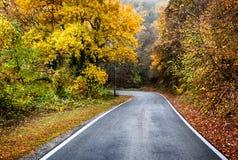 Route sur la forêt Photographie stock libre de droits