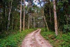 Route sur la forêt Images libres de droits