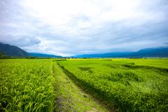 Route 193 Taiwan Paddy Field Stock Foto