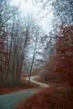 Route Twisty d'automne Photos libres de droits