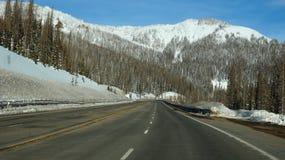 Route vers la forêt de brochets Images stock