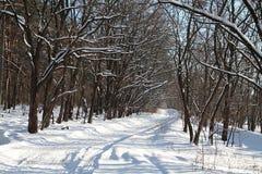 Route vide d'hiver dans les bois Image stock